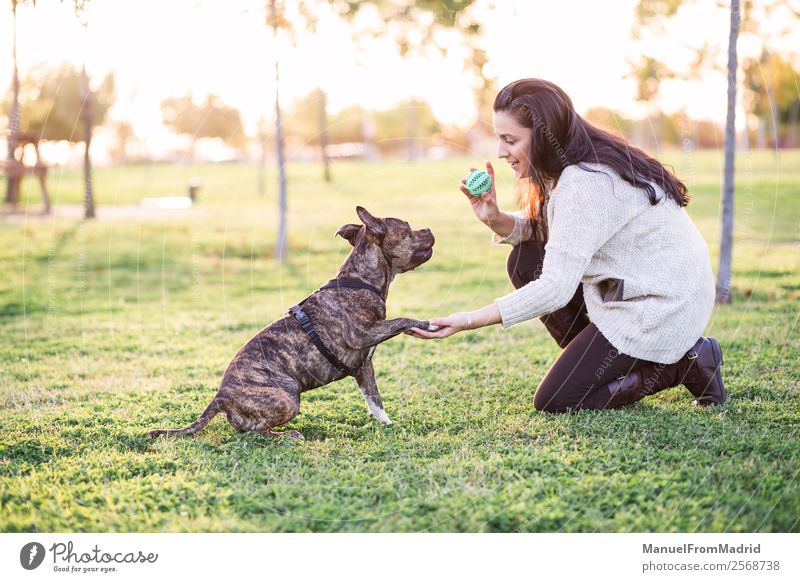cheerful woman and dog shaking hand and paw Woman Nature Dog Beautiful Green Hand Animal Lifestyle Adults Happy Grass Playing Friendship Park Smiling Cute