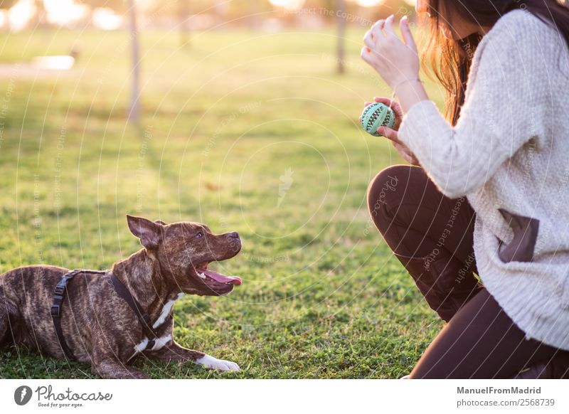 young woman playing with her dog Woman Nature Dog Beautiful Green Animal Joy Lifestyle Adults Happy Grass Together Friendship Park Smiling Cute