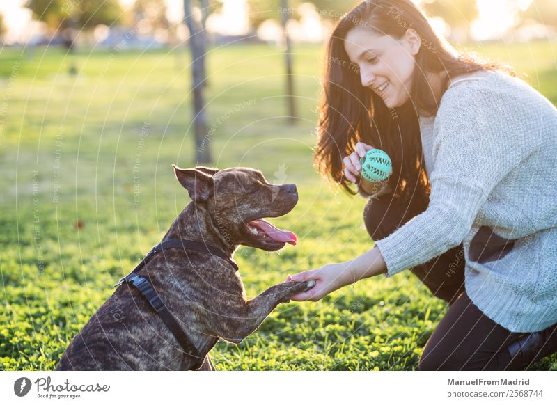 cheerful woman and dog shaking hand and paw Woman Nature Dog Beautiful Green Hand Animal Lifestyle Adults Happy Grass Playing Together Friendship Park Smiling