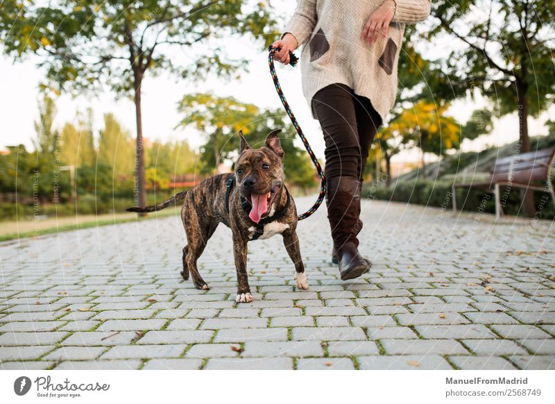 anonymous woman walking a dog Woman Dog Beautiful Tree Animal Lifestyle Adults Together Friendship Park Authentic Walking Cute Ground Protection Safety