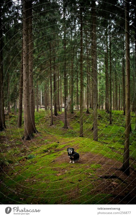 Wanna enter my district?! Nature Landscape Autumn Tree Moss Hill Dog Green Attentive Watchfulness Calm Adventure Colour photo Exterior shot Deserted Day
