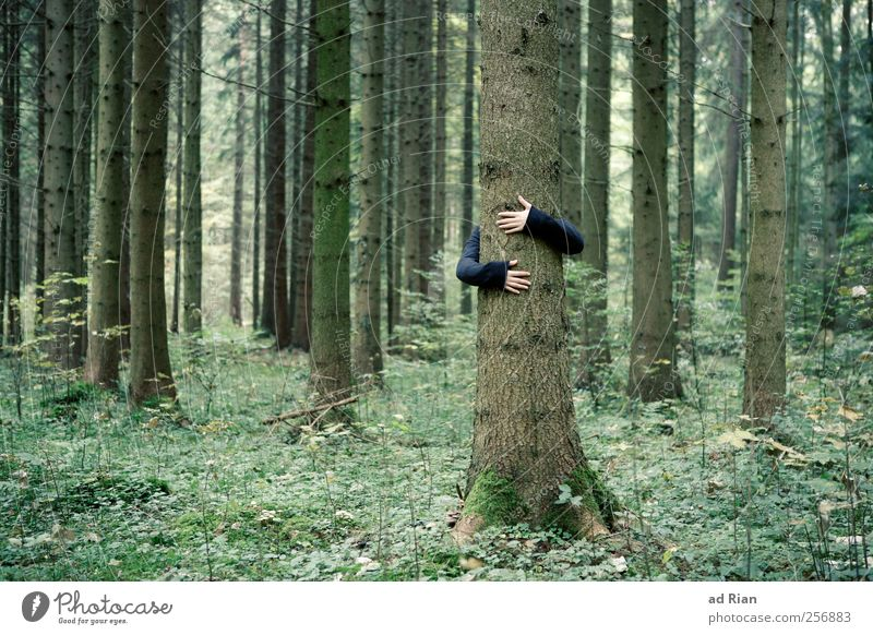 Human being Nature Hand Tree Forest Autumn Grass Arm Tree trunk Safety (feeling of) Embrace Love of nature