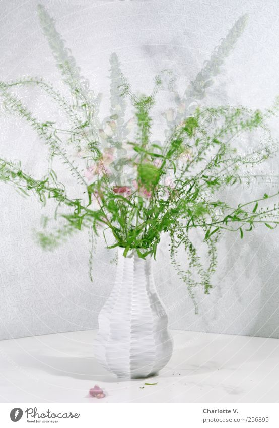 Green White Plant Life Movement Dance Pink Elegant Fresh Esthetic Stand Delicate Blossoming Bouquet Bizarre Still Life