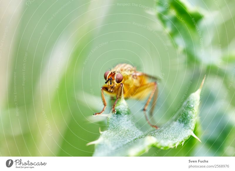 Hoverfly (Syrphidae) on one leaf Beautiful Summer Garden Nature Plant Animal Flower Leaf Yellow Green Red Hover fly Insect eyes Fly syrphids Wild