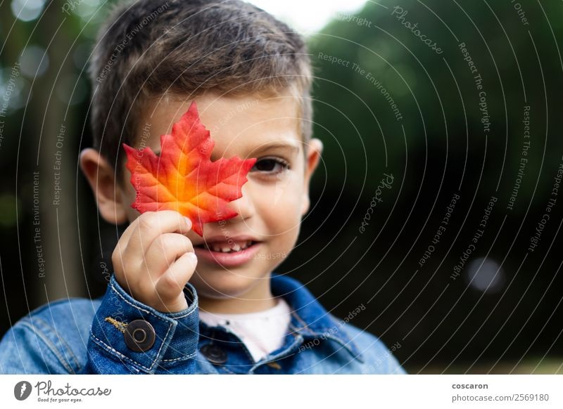 Cute boy shows a leaf in autumn in the forest Child Human being Nature Man Plant Beautiful Colour Hand Red Relaxation Leaf Joy Forest Mountain Face Lifestyle
