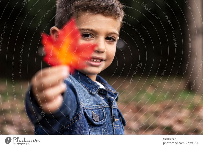 Cute boy shows a leaf in autumn in the forest Child Human being Nature Man Beautiful Colour Hand Red Leaf Joy Forest Face Lifestyle Adults Yellow Autumn