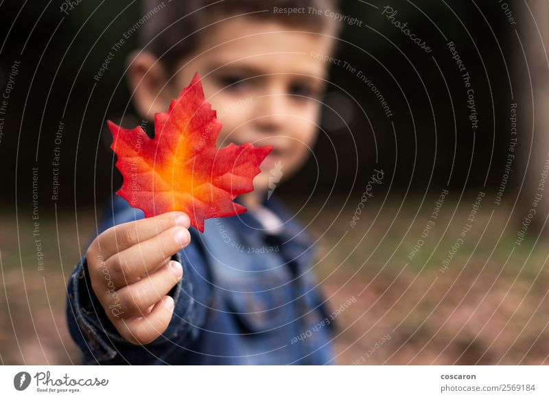 Cute boy shows a leaf in autumn in the forest Child Human being Nature Man Plant Beautiful Colour Hand Red Leaf Joy Forest Face Lifestyle Adults Yellow