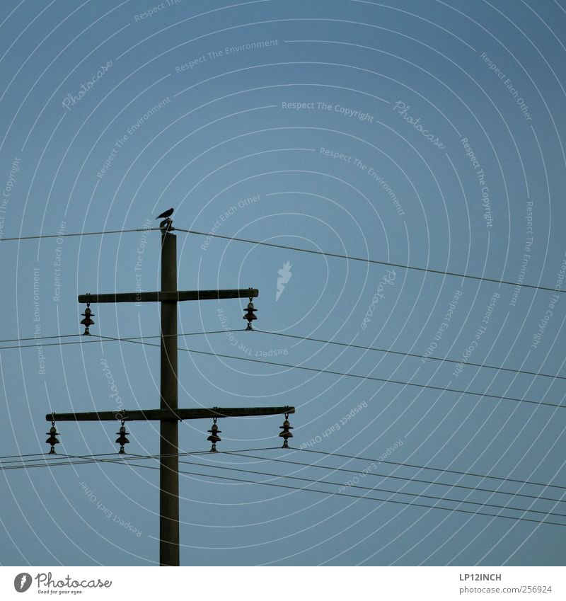 Animal Cold Bird Energy Energy industry Electricity Cable Technology Electricity pylon
