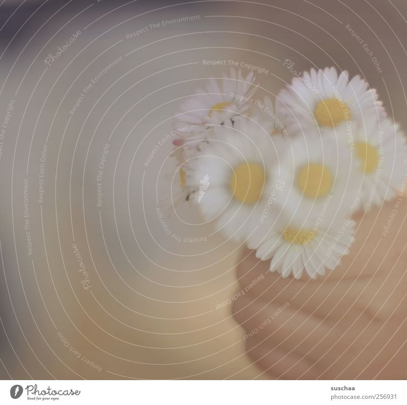 Child Hand Flower Spring Infancy Skin Fingers To hold on Blossoming Fragrance 3 - 8 years Spring fever