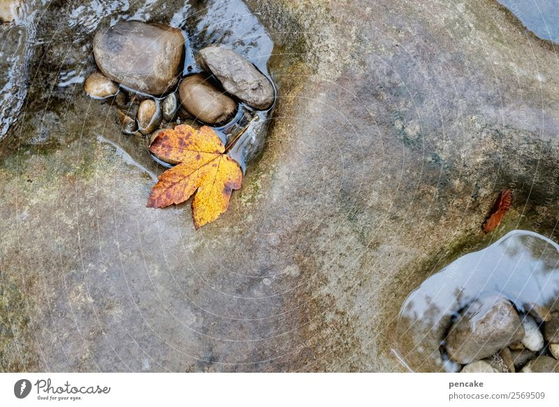 Stony, steady dripping. Nature Elements Water Autumn Leaf Forest Rock Alps Canyon River bank Stone Diet Old Work and employment Esthetic Authentic Washing