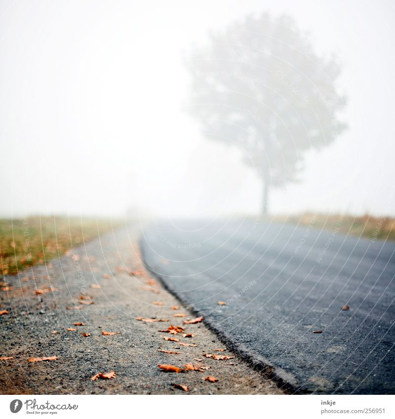 Road to nowhere Environment Nature Sky Autumn Climate Bad weather Fog Tree Leaf Meadow Outskirts Deserted Transport Traffic infrastructure Street Lanes & trails