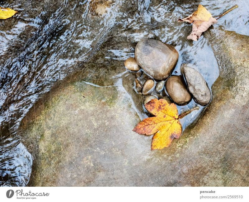 Stony steady dripping ll Elements Water Autumn Leaf Forest Alps Canyon River bank Diet Rock Rinse Stone Waves Autumnal Autumn leaves Yellow Gold Seasons
