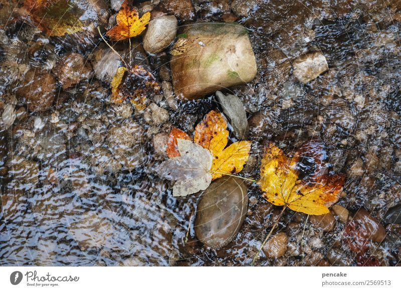 watercolours Elements Earth Sand Water Autumn Leaf Forest River bank Stone Authentic Movement Loneliness Peace Life Nature Calm Change Autumn leaves