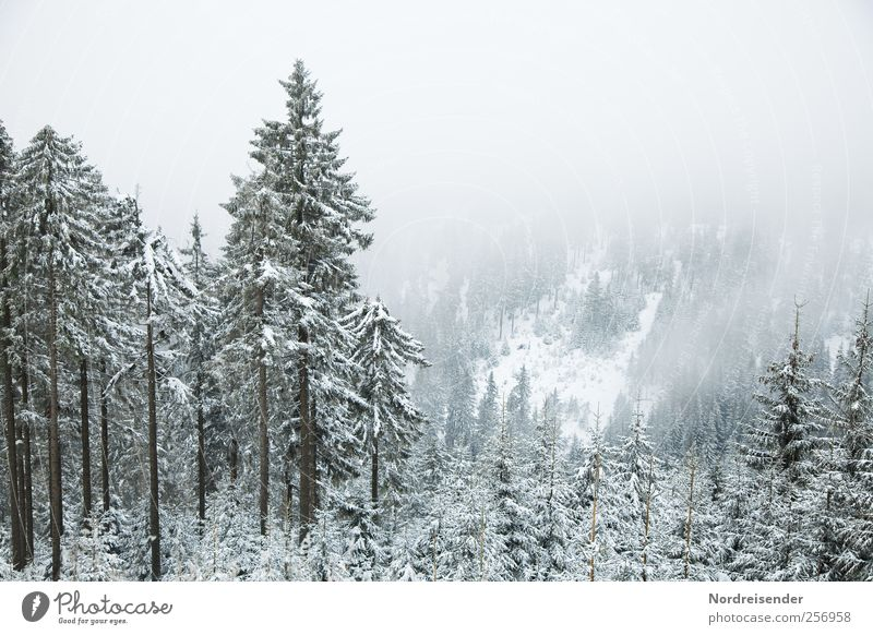 Nature Plant Winter Calm Forest Relaxation Snow Environment Landscape Mountain Weather Ice Wind Fog Trip Climate