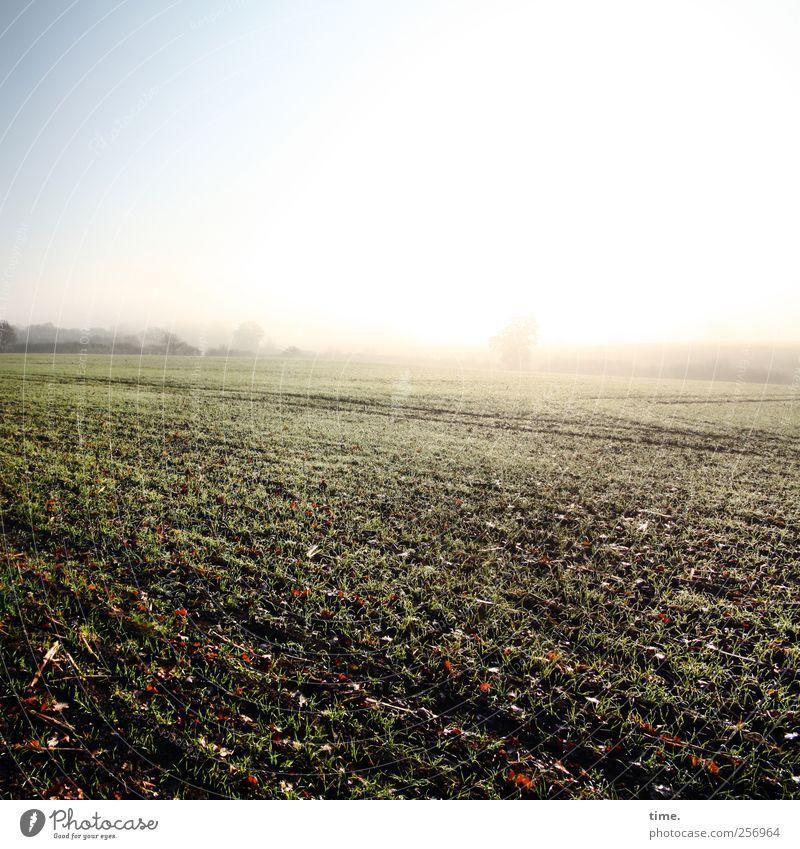 Nature Plant Autumn Environment Landscape Field Earth Esthetic Cloudless sky Agricultural crop