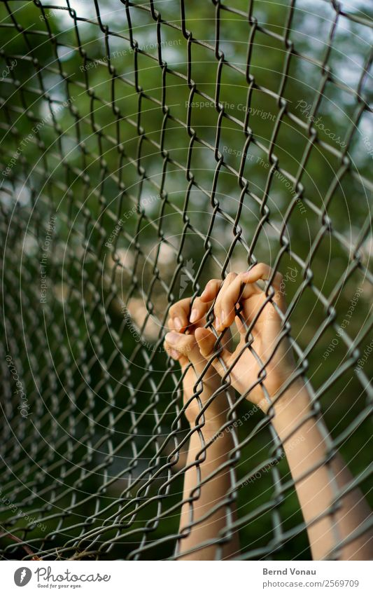 Nature Youth (Young adults) Green Hand Feminine Gray 13 - 18 years Skin Fingers Climbing Fence Hang Tunnel Captured Arch Wire netting fence
