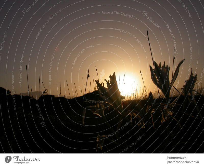 Sardinian sunset 2 Beach Sunset Grass Flower Europe lucia
