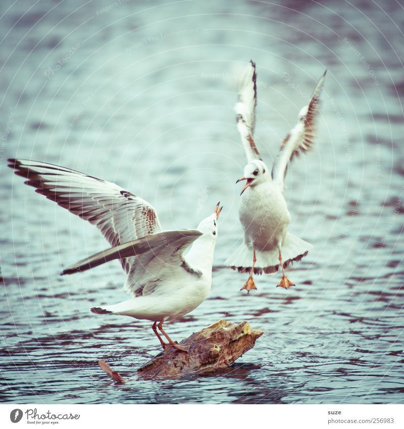 Stress test* Environment Nature Animal Elements Water Weather Lake Wild animal Bird 2 Pair of animals Scream Argument Seagull Floating Surface of water Wing