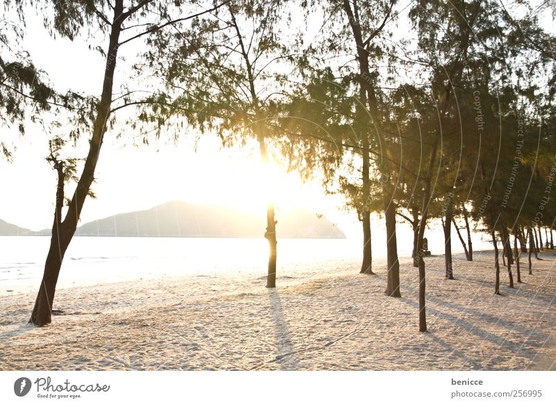 sunrise in thailand Thailand Sand Sandy beach Beach Sun Back-light Nature Tree Sunbeam Deserted Island Paradise Vacation & Travel Loneliness Palm tree