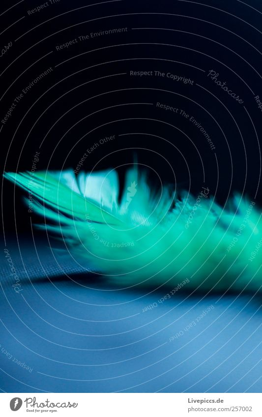 nib Animal Feather Flying Blue Green Black Colour photo Interior shot Macro (Extreme close-up) Deserted Light Shadow