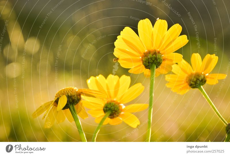 Nature Beautiful Sun Summer Flower Colour Yellow Environment Garden Warmth Moody Park Weather Contentment Growth Exceptional