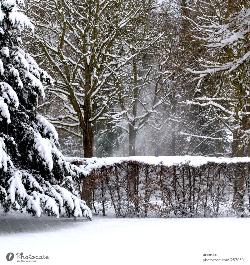 Powdered Environment Nature Landscape Winter Weather Snow Snowfall Tree Bushes Garden Forest Cold Calm Colour photo Subdued colour Exterior shot Deserted Day