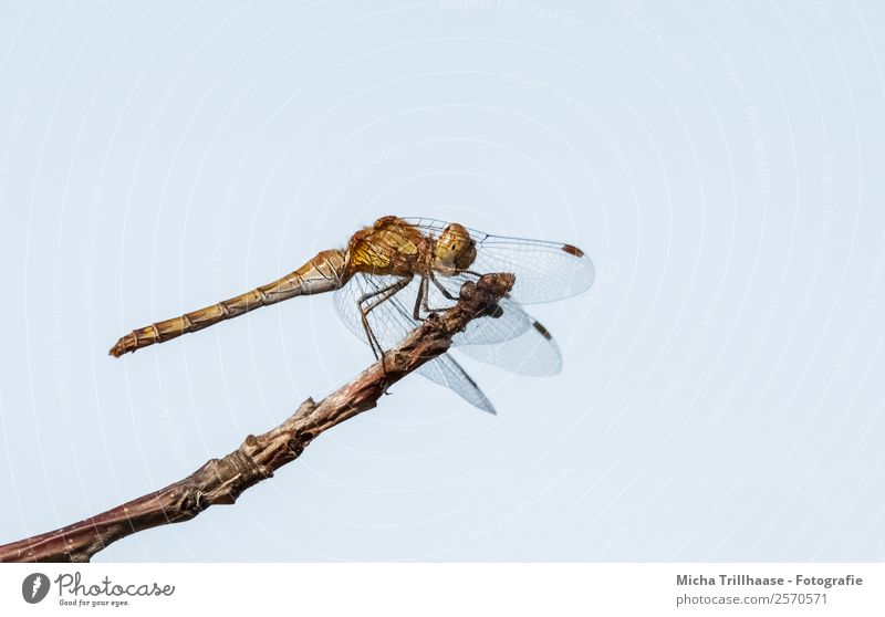 Dragonfly on the branch Nature Animal Sky Cloudless sky Sun Sunlight Beautiful weather Tree Branch Twigs and branches Wild animal Animal face Wing