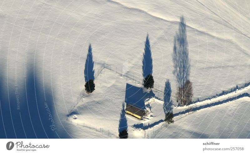 White Tree Winter House (Residential Structure) Landscape Cold Snow Lanes & trails Ice Frost Beautiful weather Farm Snowscape Black Forest Shadow play Building