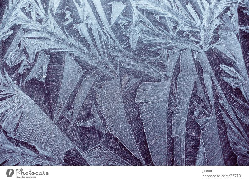 ice springs Winter Ice Frost Cold Beautiful Black White Frostwork Ice crystal Colour photo Subdued colour Exterior shot Close-up Pattern Structures and shapes