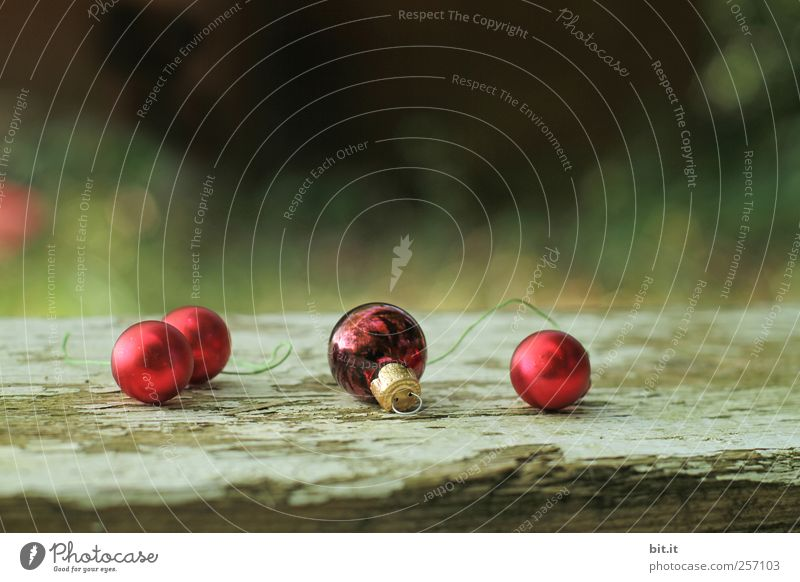 Nature Old Christmas & Advent Green Red Winter Environment Landscape Wood Moody Feasts & Celebrations Lie Glittering Living or residing Decoration Round