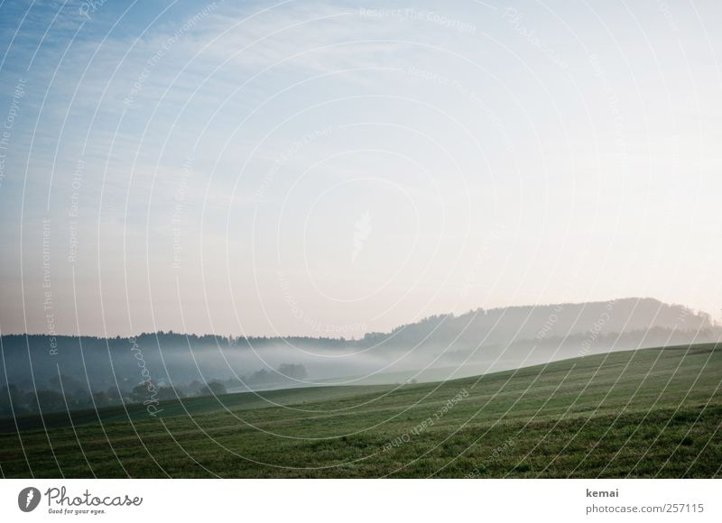 In the morning Environment Nature Landscape Plant Sky Sunlight Autumn Fog Tree Grass Foliage plant Meadow Field Forest Fresh Cold Green Morning fog Go up