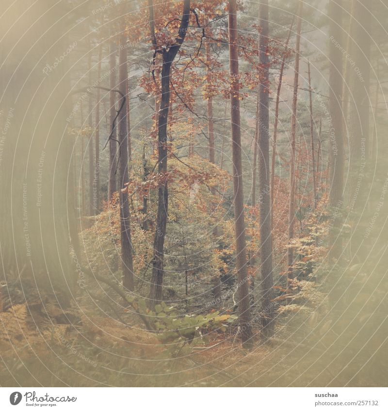 pfälzer forest II Environment Nature Autumn Bushes Fern Forest Wood Brown Retro Colours trees tree trunks branches Leaf leaves Diffuse Enchanted forest