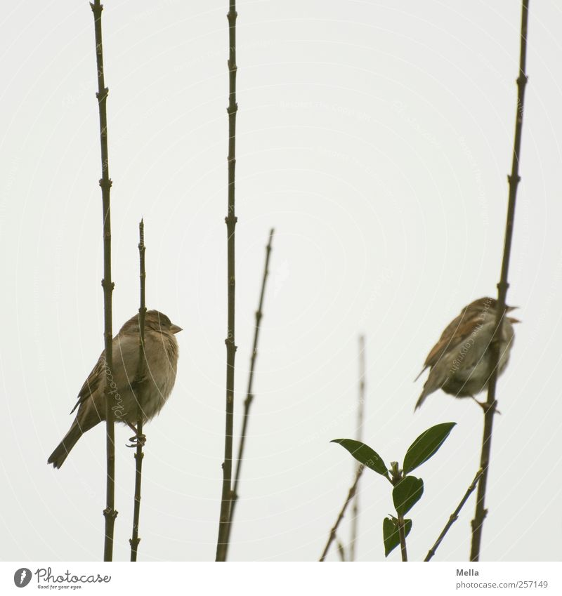 Nature Plant Animal Environment Gray Small Together Bird Sit Pair of animals Natural Free In pairs Bushes Cute Branch
