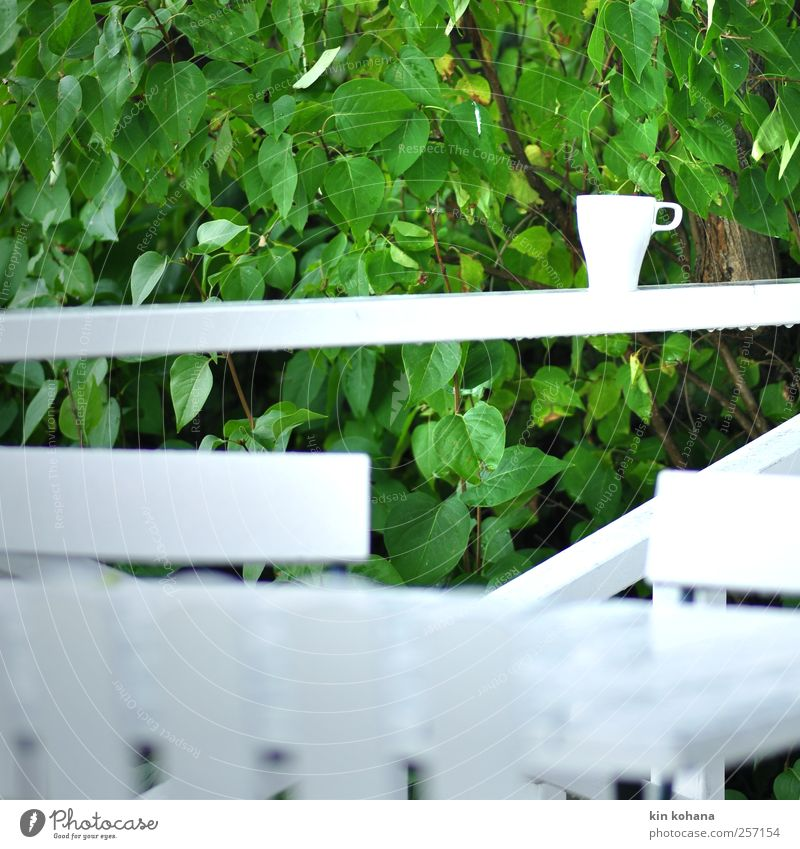 Green White Tree Plant Calm Relaxation Nutrition Garden Park Rain Wet Beverage Break Coffee Bushes Café