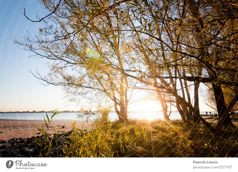 sunny prospects Environment Nature Landscape Plant Elements Air Water Sun Sunrise Sunset Sunlight Climate Weather Beautiful weather Tree Forest Waves Coast