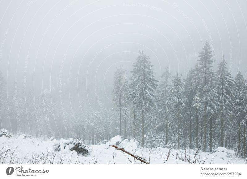 Plant Tree Calm Landscape Winter Forest Cold Mountain Snow Moody Ice Fog Climate Gloomy Growth Frost