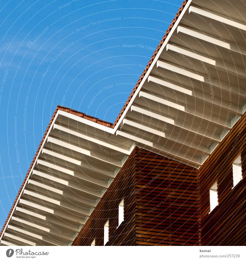 wooden house Cloudless sky Sun Sunlight Autumn Beautiful weather Detached house Manmade structures Building Architecture Wooden house Facade Window Roof