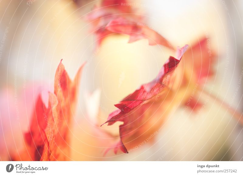 Nature Plant White Red Leaf Environment Warmth Emotions Autumn Moody Bushes Transience Beautiful weather Hope Meditation Autumn leaves