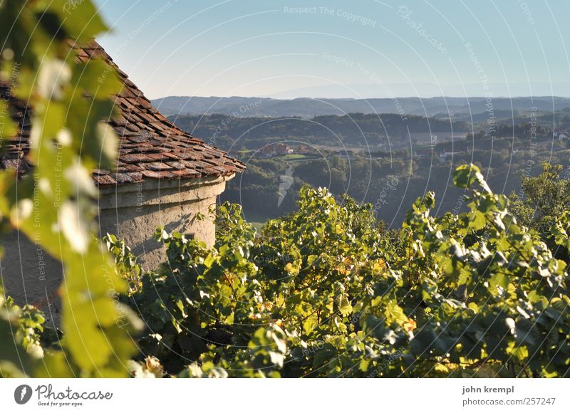 Dahoam Environment Cloudless sky Horizon Plant Leaf Vineyard Wine growing Forest Hill Alps Graz Federal State of Styria Riegersburg Tower Manmade structures
