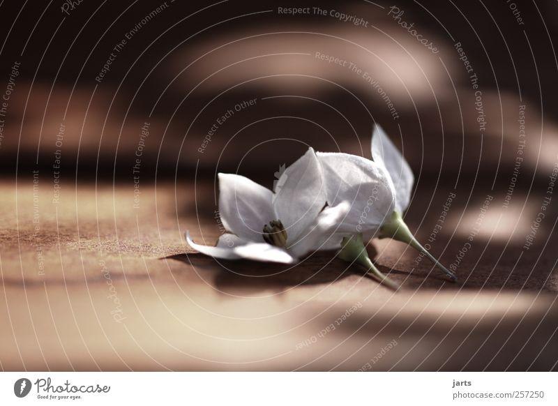 Plant Calm Blossom Natural Hope Simple Peace Serene Fragrance