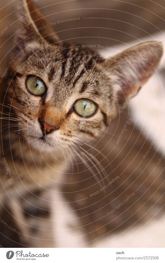 kid cat Animal Pet Cat Animal face 1 Baby animal Cute Brown Kitten Subdued colour Exterior shot Deserted Copy Space bottom Day Bird's-eye view Animal portrait