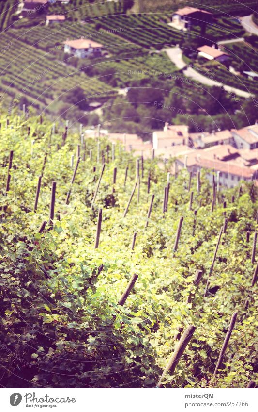 Grape blood. Art Esthetic Vine Vineyard Bunch of grapes Grape harvest Wine growing Winery Italy Village Mountain village Loneliness Agriculture Slope Tradition