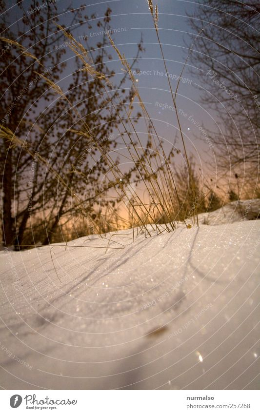 over Style Leisure and hobbies Garden Nature Landscape Night sky Stars Winter Climate Weather Ice Frost Snow Bushes Freeze Glittering To enjoy Dream Cold Moody