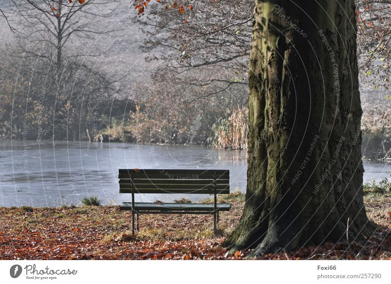 Lonely place Harmonious Relaxation Calm Trip Nature Water Sun Autumn Beautiful weather Tree Bushes Park Pond Deserted Park bench Wood Movement To enjoy Blue