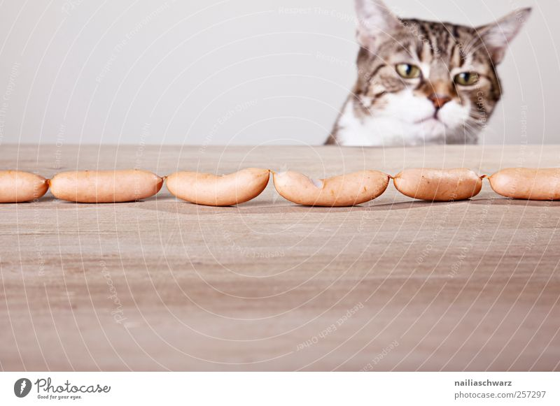 Cat Animal Yellow Wood Gray Sadness Brown Food Hope Curiosity Animal face Fat Delicious Pet Interest Frustration