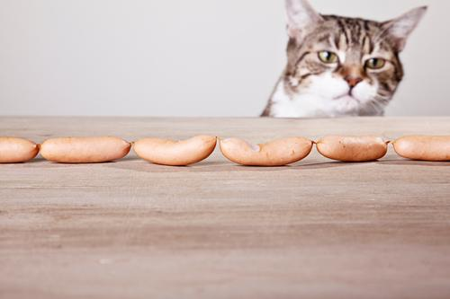 temptation Food Sausage Animal Pet Cat Animal face 1 Wood Looking Sadness Fat Delicious Brown Yellow Gray Love of animals Desire Curiosity Interest Hope