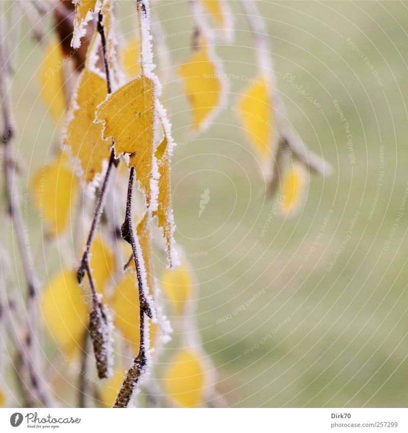 Nature Green White Tree Plant Leaf Yellow Autumn Meadow Cold Garden Ice Gold Natural Change Gloomy