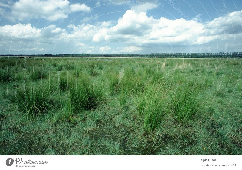 Nature Meadow Grass