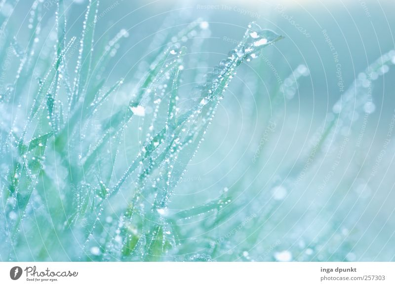 morning dew Environment Nature Landscape Plant Elements Water Drops of water Spring Climate Beautiful weather Bad weather Fog Grass Foliage plant Wild plant