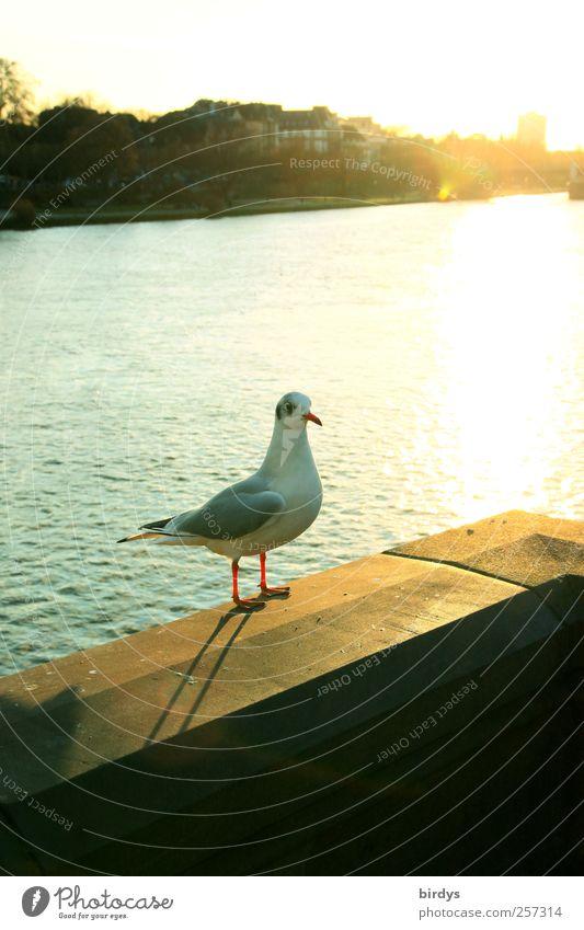 seagull Sightseeing City trip Water Sun Sunlight Autumn Beautiful weather River bank Bridge railing Wild animal Bird 1 Animal Observe Looking Stand Esthetic